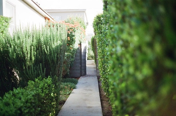 How to Get a Cost-Saving and Low-Maintenance Yard