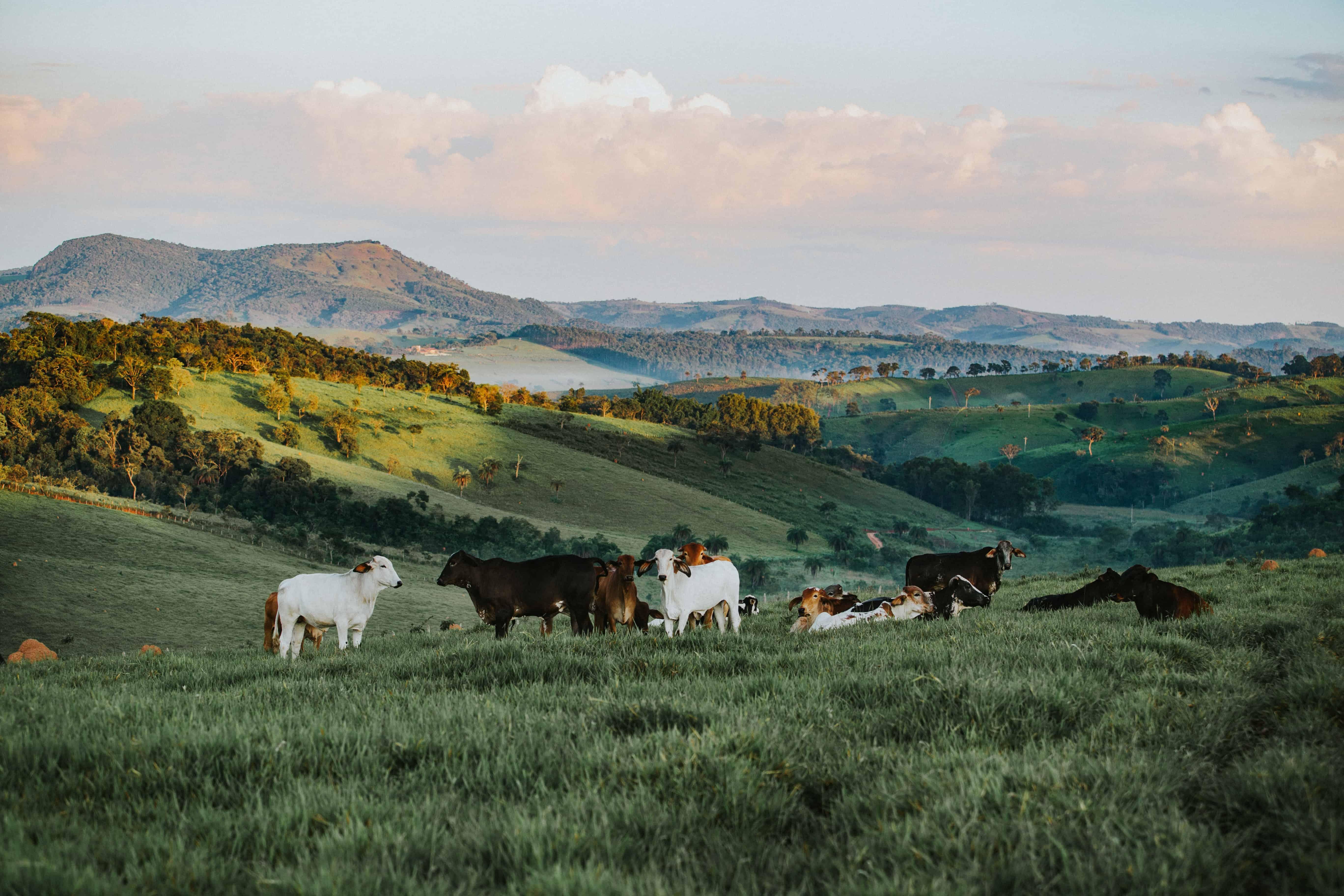 Extra Cash for Livestock